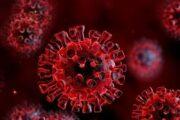 نقش گروه خونی در ابتلا به ویروس کرونا